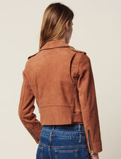 Suede perfecto jacket : Coats & Jackets color Terracotta